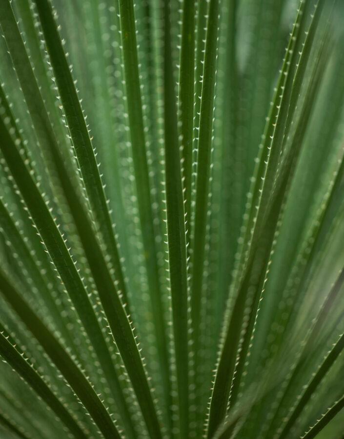 Governança Folha de Araceae no Inhotim