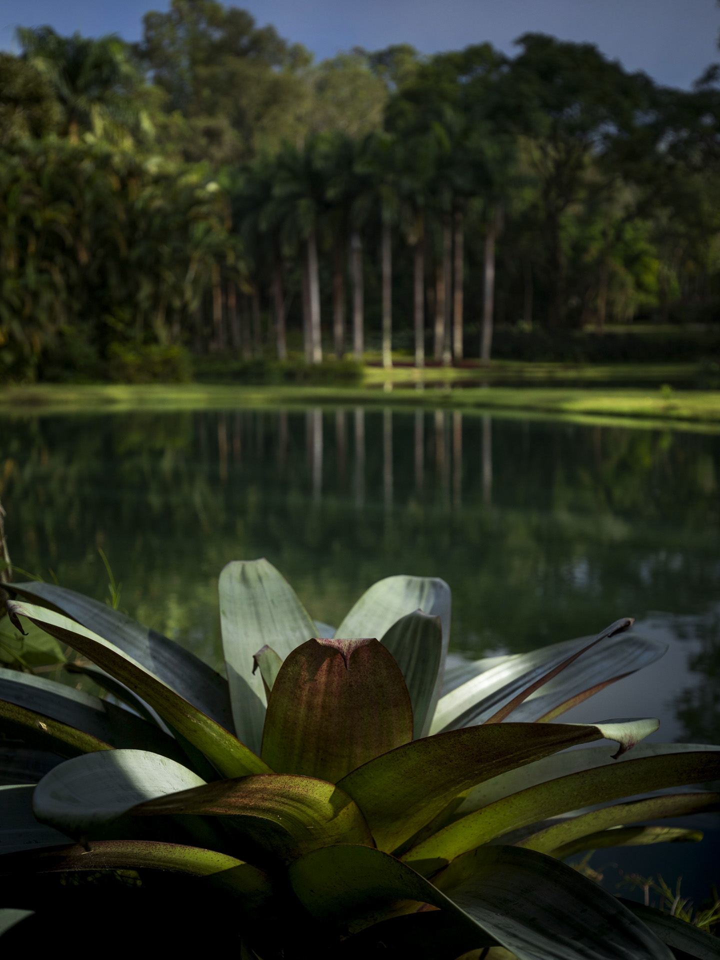 Bromeliaceae Jardim Botânico Inhotim.