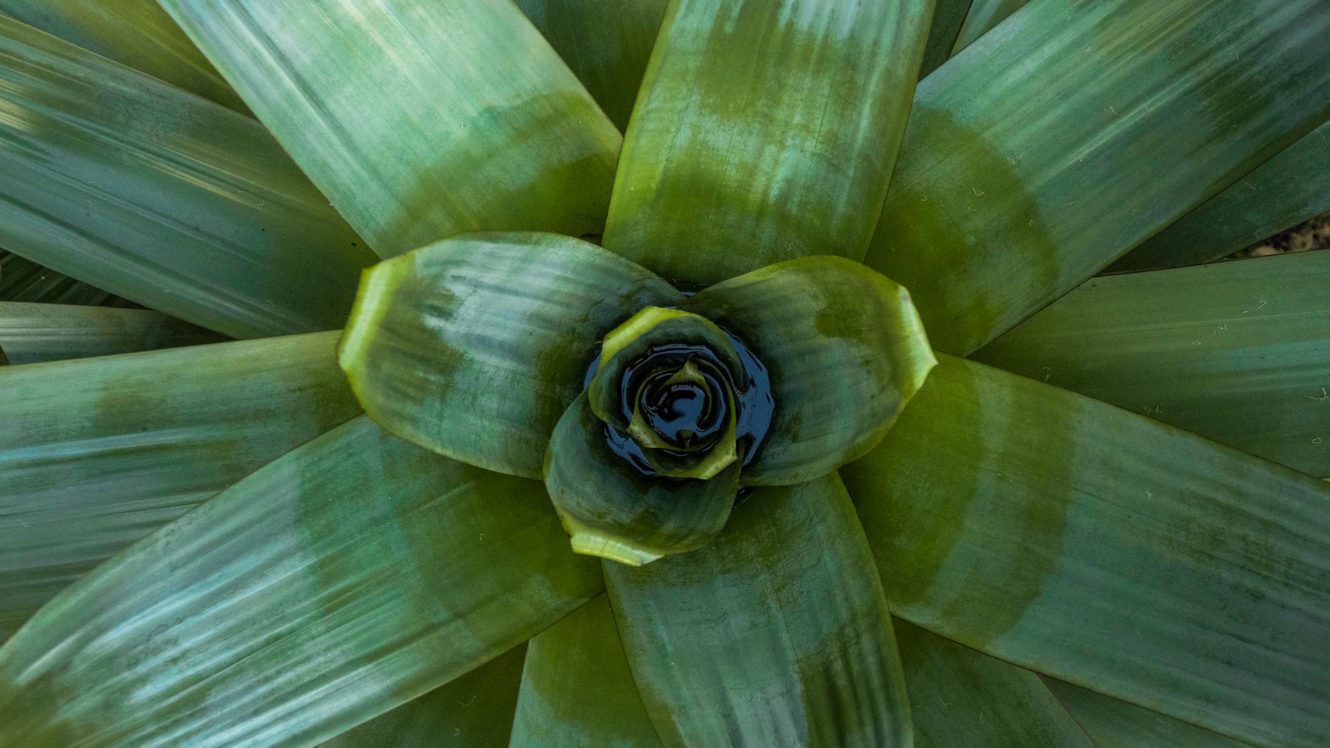 Bromélia-imperial Inhotim