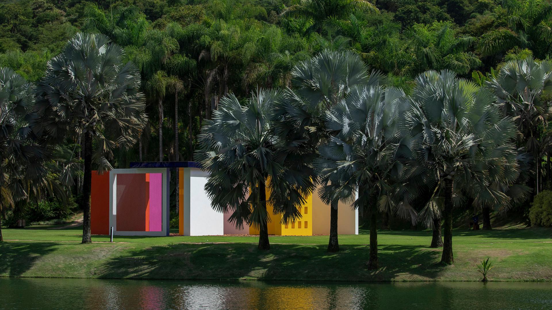 Palmeira-azul Inhotim