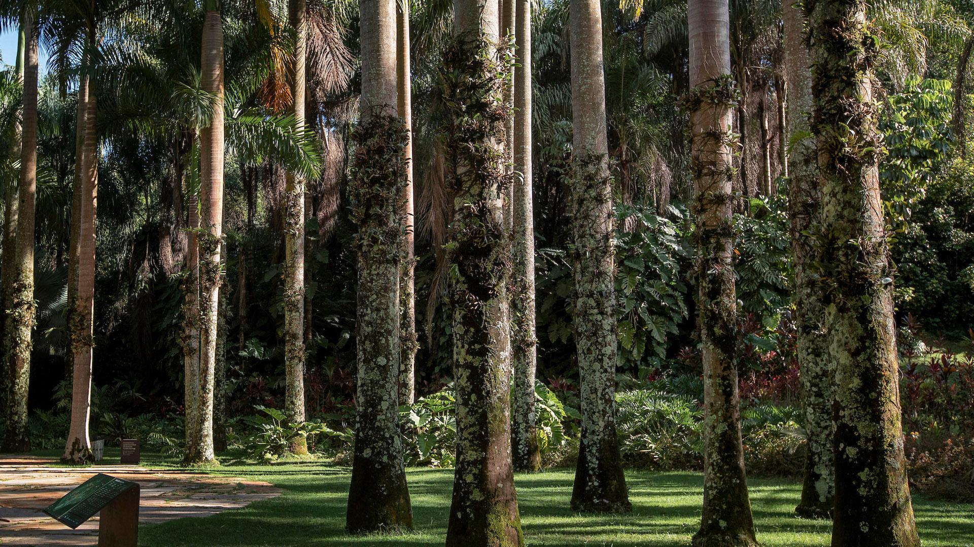 Largo das Orquídeas Jardim Botânico Inhotim