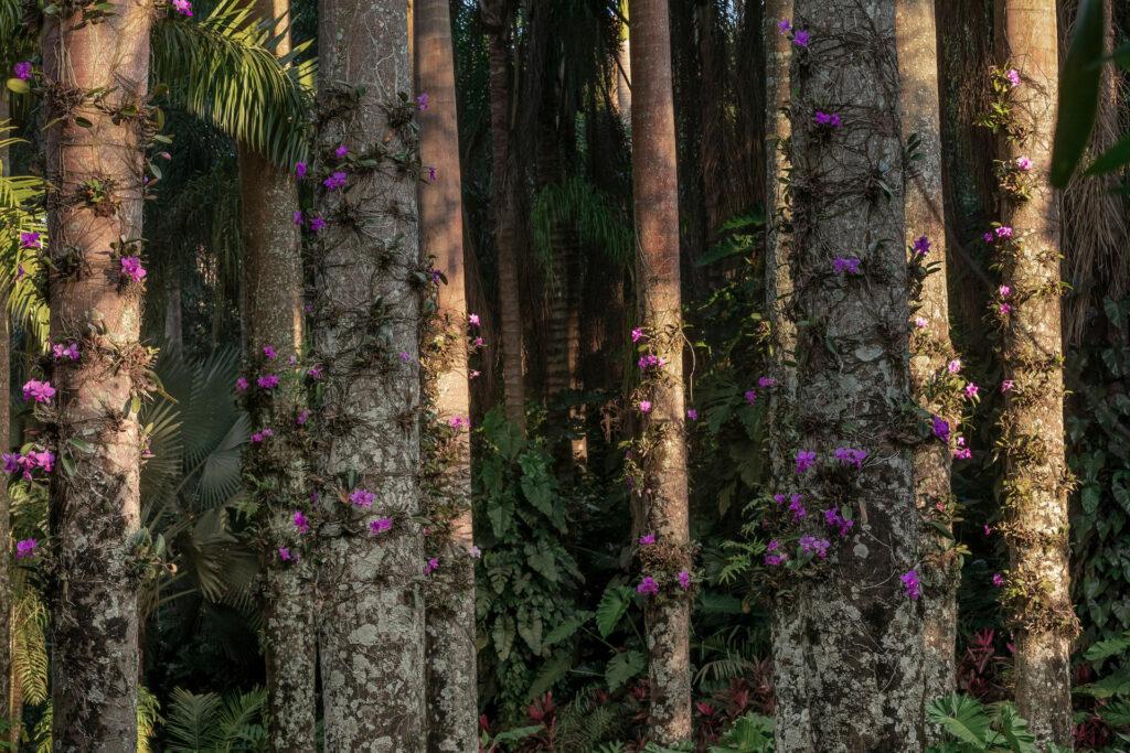 Jardim Temático Largo das Orquídeas Inhotim