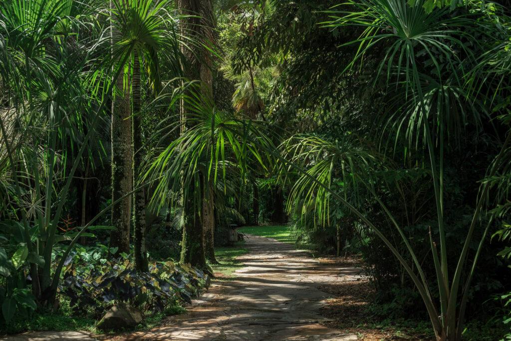 Jardim Temático Jardim Pictórico Inhotim