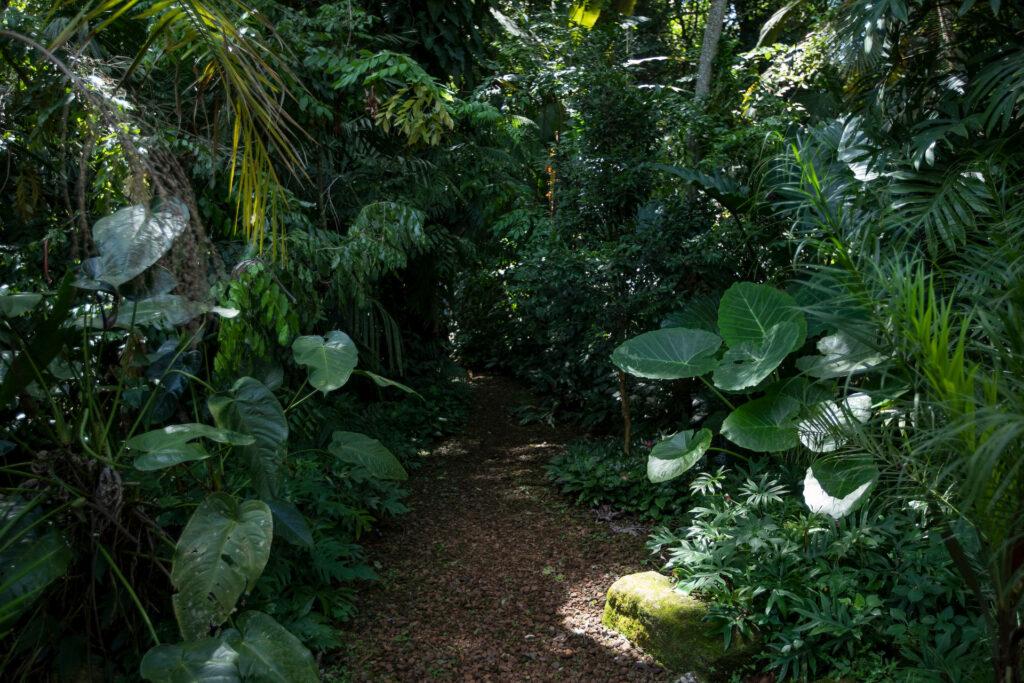 Jardim de Transição Inhotim