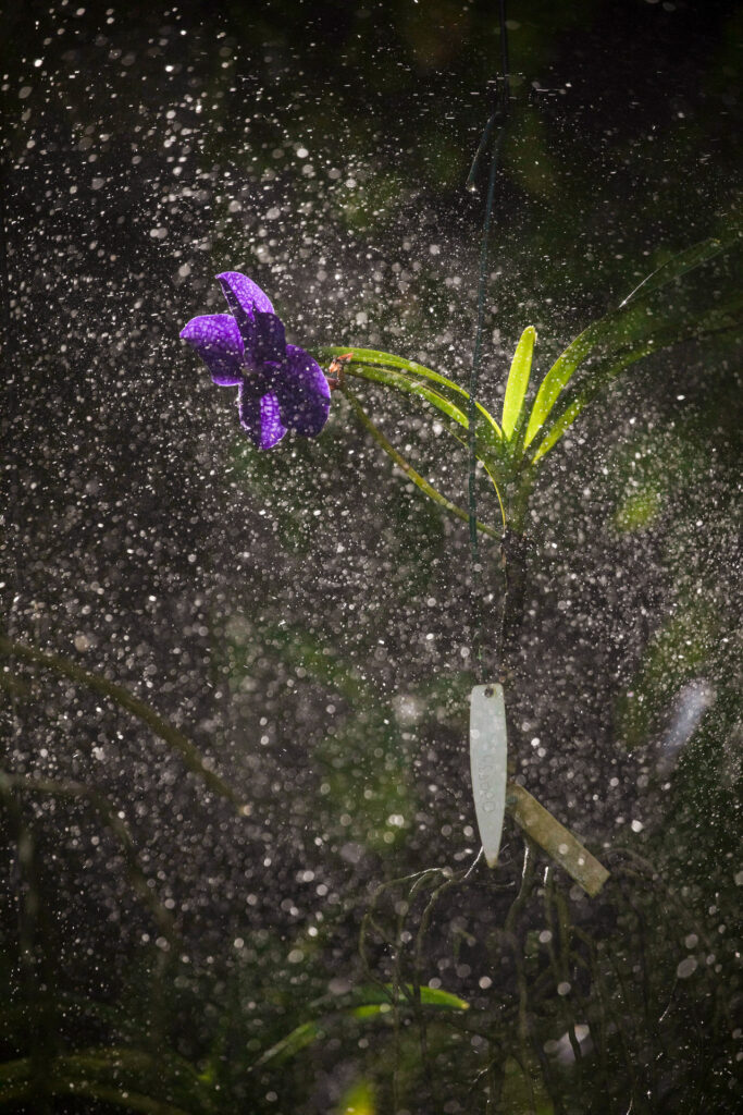 Vandário. Acervo botânico Inhotim