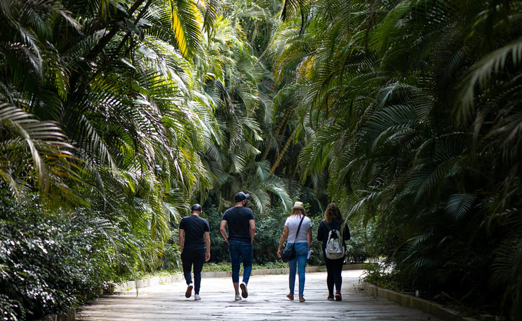 Visita mediada com o curador integra a programação da Semana do Meio Ambiente do Inhotim. Foto: Brendon Campos